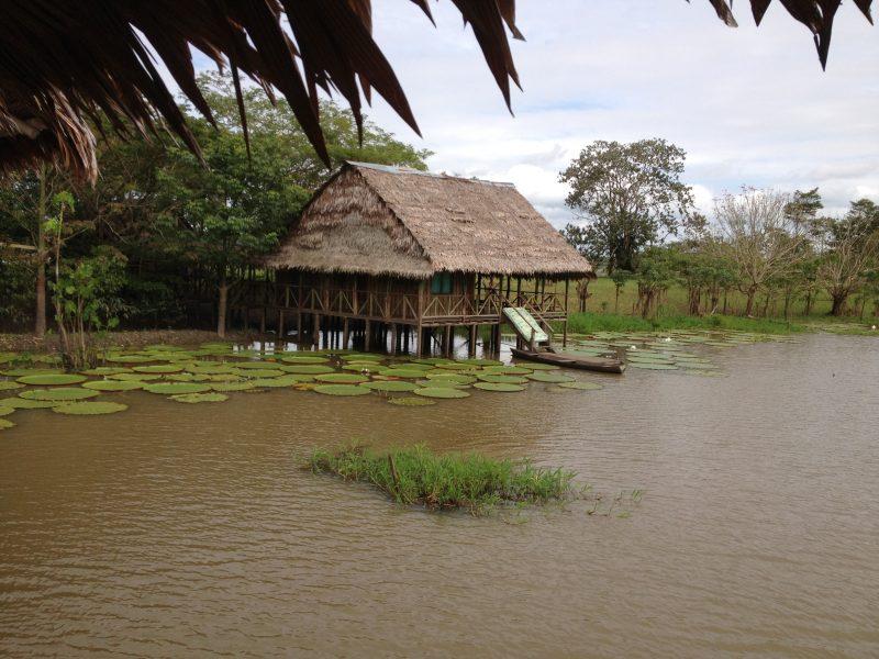 Amazonía, un lugar lleno de vida